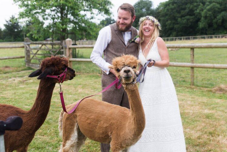 llama at a wedding petting zoo
