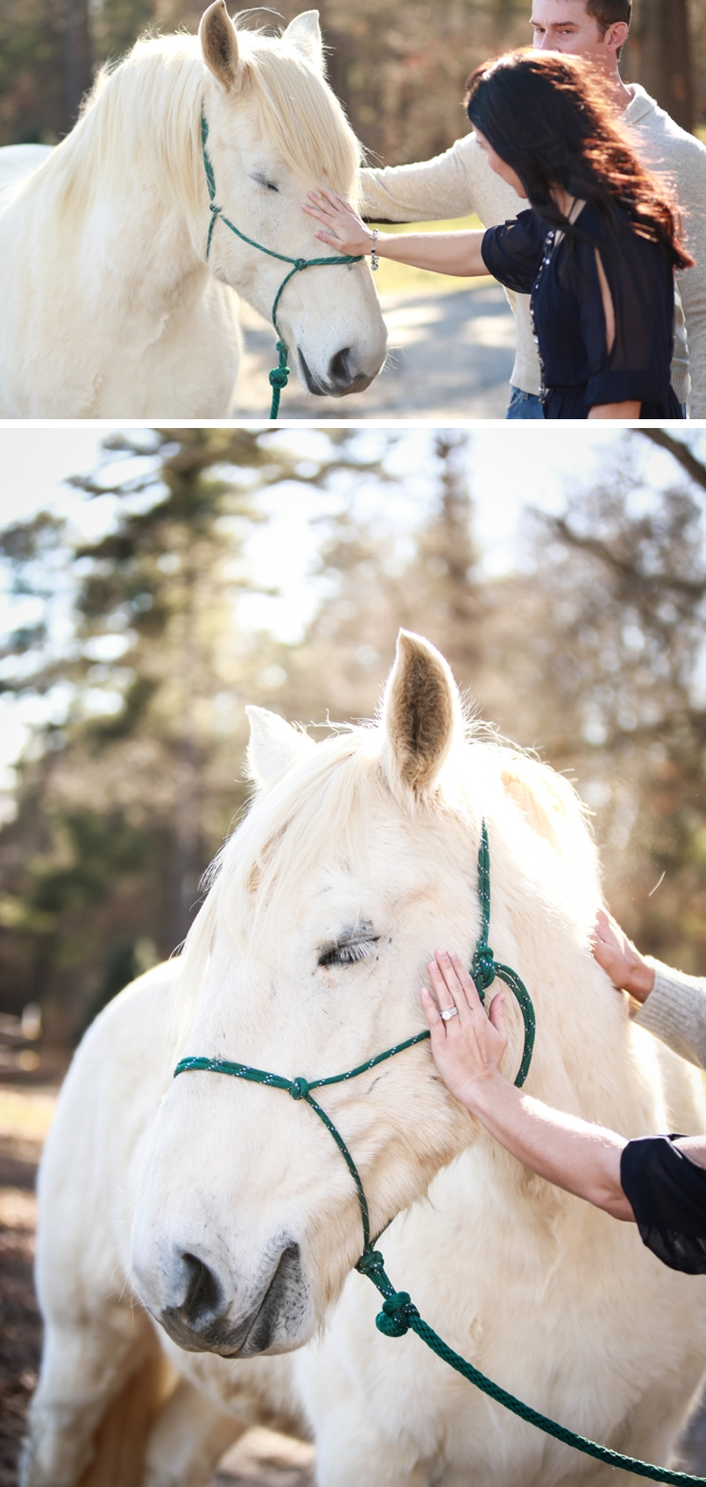 A sweet engagement session with a gorgeous white horse at The Biltmore by Katy Cook Photography || see more on blog.nearlynewlywed.com