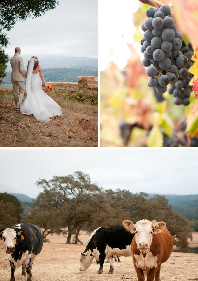 Kunde Family Estate Winery Wedding by LH Photography